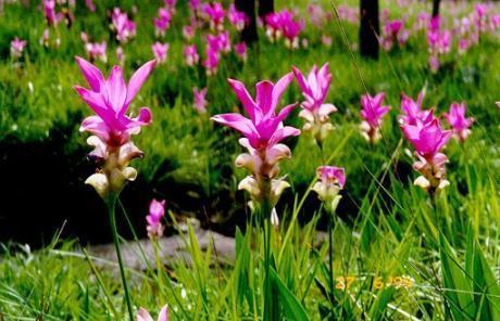 Куркума - лучшая пряность для красивого цвета